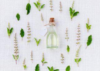 Lecznicze rośliny i zioła